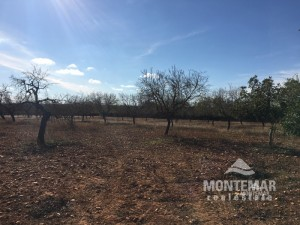 Building plot with views to Santanyi
