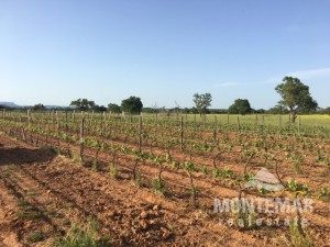 New building project with own vineyard - Campos
