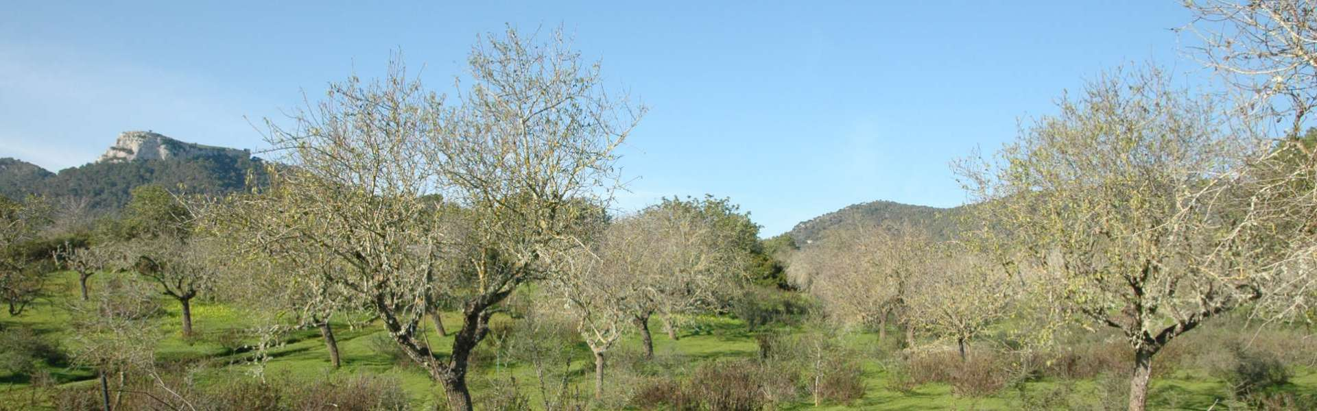 S'Horta - Plot of land next to Vall D'Or golf course