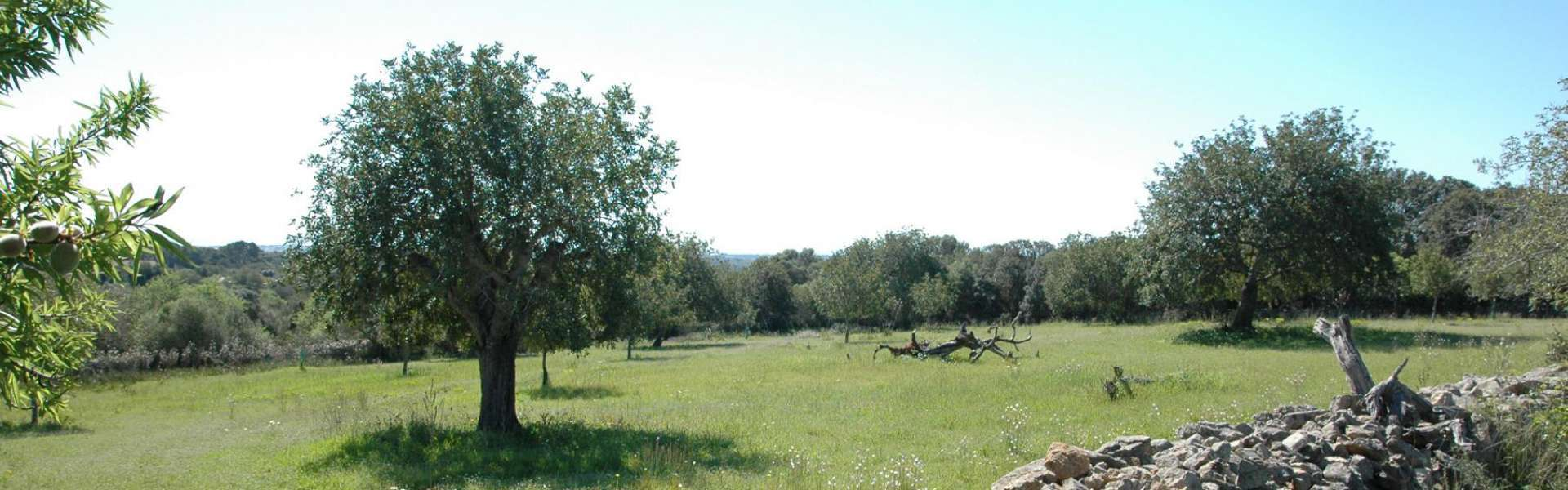 Plot of land with sea views in Alqueria Blanca