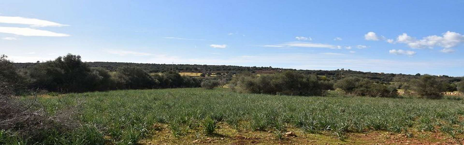 Campos - Finca ruin with idyllic spacious property