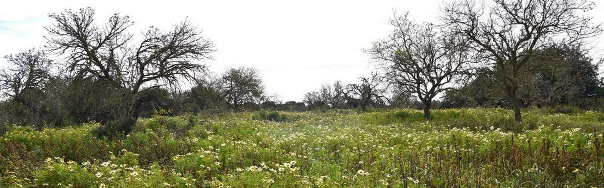 Plot with building project in Es Llombards for sale